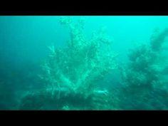 ソフトコーラルと群れを中性浮力で楽しむ熱海沖初島のダイビング