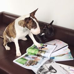 Going over the Collectors Edition of Love Magazine with Charlie