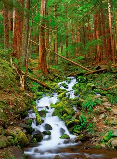 Running Through the Forest - Sol Duc Forest - Olympic National Park - Washington