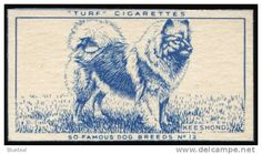 "This single original cigarette card was issued in 1952 in the United Kingdom by Carreras for their Turf brand of cigarettes. This card is from a 50 card set entitled "" Famous Dog Breeds "". It was cut out from the slider inside the packet.....which explains any irregularity at the edges. The reverse of the card is plain. It measures 2.5 inches by 1.5 inches approx."