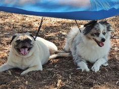 Taking a break in the shade of the hammock