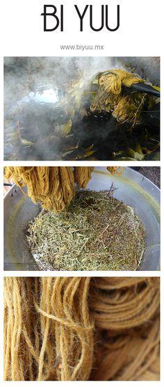 Nuestros procesos de teñidos naturales con planta Pericón. 100% ecológicos. │Our natural dyed process with pericon plant pigment. 100% ecological www.biyuu.mx