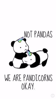 We are pandacorns not pandas Niedlicher Panda, Panda Love, Cute Panda, Panda Funny, Unicorn Quotes, Unicorn Art, Cute Unicorn, Panda Wallpapers, Cute Wallpapers