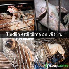 Meidän ei tarvitse edes sanoa että tämä on väärin - sinä tiedät sen jo. Tuotantotilojen eläimet elävät kurjissa ja ahtaissa olosuhteissa joka puolella maailmaa, oli sitten kyse suomalaisesta sikalasta, ruotsalaisesta kanalasta, espanjalaisesta hanhenmaksafarmista tai kiinalaisesta koiranlihatilasta.  Miljoonat ihmiset ympäri maailmaa ovat päättäneet siirtyä kasviperäiseen ruokavalioon - ja joka päivä he tekevät ostopäätöksiä, joilla he vastustavat eläinten kohtelua pelkkinä tuotantokoneina.