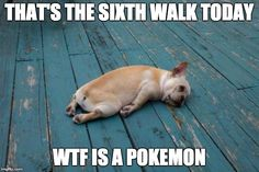 Pokemon Go and poor dog