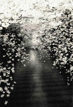 Masao Yamamoto. ☀
