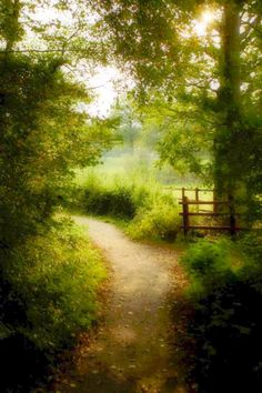 Path in the Hundred Acre Wood (Hartfield, England) by Terry Eustler (summer photography scenery)