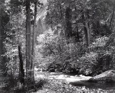 "Ansel Adams, ""Tanaya Creek, Dogwood Rain"" (1948) | photograph | gelatin silver print    Source: http://www.sfmoma.org/explore/collection/artwork/103075#ixzz1jC3aq22h   San Francisco Museum of Modern Art"