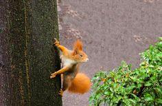 Σημάδια της Φύσης που Μπορούν να Σας Σώσουν την Ζωή - Σελίδα 6 από 43 - Top Gentlemen Nature Pictures, Free Pictures, Free Images, Petunias, Squirrel Video, Squirrel Tail, Low Dose Naltrexone, Something Bad, Rodents