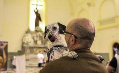 - No Dia de São Francisco, saiba mais sobre o padroeiro dos animaisO Dia dos Animais é celebradonesta terça-feira (4).Em igrejas dedicadas a são Francis...