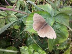 Butterfly (2) in Hitchin 04.08.2013 by Chiara