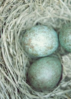 Beautiful bird's eggs in my favourite colour
