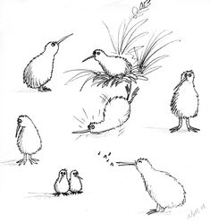 Kiwi Sketches Why all the kiwi? Plus I have an idea for a larger piece. Let's just say it involves lots of kiwi. I like the one in the upper left corner the best. He looks like the cu. Bird Drawings, Cartoon Drawings, New Zealand Tattoo, Kiwi Bird, Maori Designs, Nz Art, Kiwiana, Sister Tattoos, Watercolor Illustration
