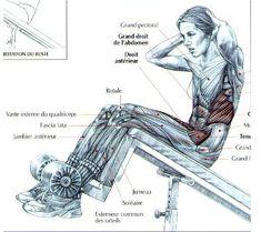 Incline bench sit-ups Fascia Lata, Quadriceps Femoris, Gluteus Medius, Tensor Fasciae Latae, Latissimus Dorsi, Greater Trochanter, Incline Bench, Anatomy Reference, Crunches