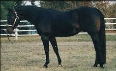 Canadian Cutting Horse:     Canada has no indigenous horse breeds, but has long been known for breeding quality animals of many different types. The Canadian Cutting Horse is a recognized Canadian type.    via: www.theequinest.com  www.myrealhealth.com