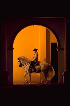 SPAIN - Andalucía. Andalusia horse. REAL ESCUELA ARTE ECUESTRE Jerez Spain