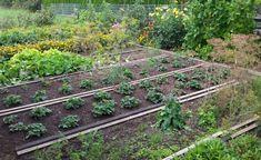Eine gute Anbauplanung ist die halbe Miete für den Ernte-Erfolg im Gemüsegarten. Nutzen Sie den arbeitsarmen Winter, um die Gemüsebeete für die neue Saison zu planen und das nötige Saatgut zu kaufen.