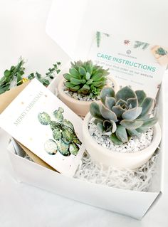 Gift Box - 2 Succulents Personalized Gift Box Custom Gift Box Succulents Favor Gifts that Grow Thank Christmas Gift Baskets, Christmas Gift Box, Perfect Christmas Gifts, Christmas Holidays, Succulent Favors, Succulent Care, Succulent Gardening, Christmas Crackers, Fun Cup