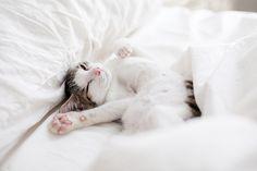 Kitties love clean sheets.
