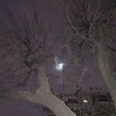 Find images and videos about aesthetic, nature and dark on We Heart It - the app to get lost in what you love. Aesthetic Grunge, Aesthetic Photo, Aesthetic Pictures, Arte Emo, Arte Ninja, Horror, Grunge Photography, Southern Gothic, Creepy