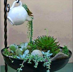 Pouring succulents