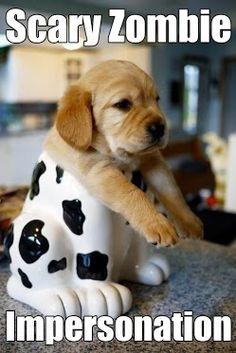 lol #dog http://buymelaughs.com/ Funny pics of Puppies #puppies #pics