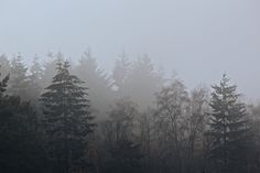 #nature #fog #trees #forest #dark #cold #silence