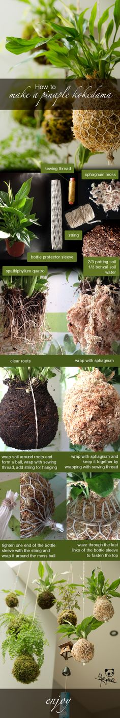 Kokedama Balls Japanese String Garden DIY Learn How To Make A Hanging Kokedama Bonsai Garden … Hanging Plants, Diy Garden, Plants, Garden, Indoor Garden, Succulents, Kokedama, Mini Garden, Hanging Garden