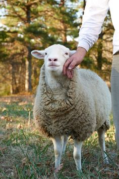 Artaman: The Hyperborean Garden Sheep Farm, Sheep And Lamb, All Gods Creatures, Cute Creatures, Farm Animals, Cute Animals, Wild Animals, Grazing Animals, Man Beast
