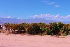 5 of my favorite things about Indio, California! - La Quinta Luxury Real Estate, Luxury Homes For Sale La Quinta CA