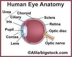 Essential Oils Improving Eyesight? #improveeyesightexercises