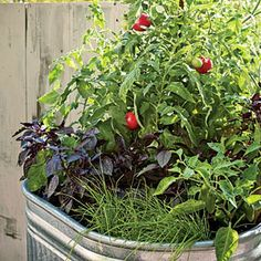 Container Vegetable Garden by Sunset