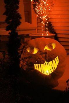 Halloween cat pumpkin jack o lantern