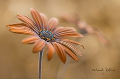 Daisy | by Mandy Disher