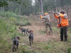 German Shorthaired Pointer Quail hunting behind beautiful German shorthair pointers - Ezra, Rebel and Cane @ Hurricane Branch Plantation. Bird Dog Training, Dog Training Classes, Dog Training Techniques, Quail Hunting, Hunting Dogs, Pheasant Hunting, Turkey Hunting, Gsp Puppies, French Dogs
