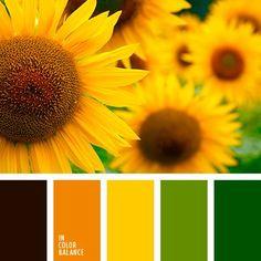 amber, black, black and yellow, bright yellow, carrot-orange Orange Color Schemes, Black Color Palette, Paint Color Schemes, Colour Pallette, Color Concept, Pumpkin Colors, Green Pumpkin, Sunflower Colors, Orange Color Palettes
