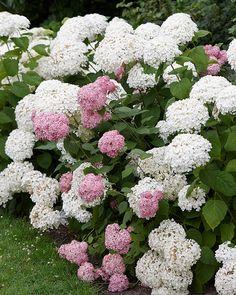 Garden Inspiration, Garden Ideas, Garden Planning, Home And Garden, Vegetables, Spring, Hydrangeas, House, Home