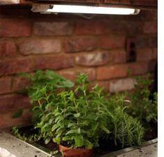Diy Kitchen Countertop Garden Love This Idea A Basin 400 x 300