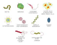 Cross Stitch Pattern Common Microbes set 1 by aliciawatkins