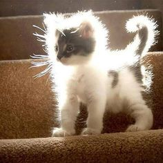 she is enlightened, transcending her corporeal kitty cat shape and will soon tran . - Domestic Cats 'n Kittens - Adorable Animals Cute Cats And Kittens, Cool Cats, Kittens Cutest, Big Cats, Funny Animals With Captions, Funny Animal Pictures, Funny Photos, Animals And Pets, Baby Animals