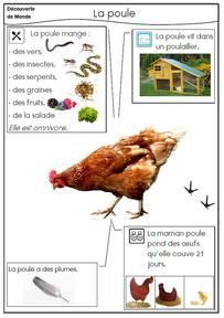 Teaching 172544229454449346 - La poule Plus Source by chezmanounoufre Kindergarten Projects, French Education, French Classroom, Animal Crafts For Kids, French Lessons, Teaching French, Learn French, Science Projects, Life Science