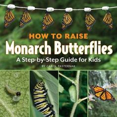 How to Raise Monarch Butterflies A Step-by-step Guide for Kids (Book) : Pasternak, Carol : Step-by-step instructions and color photographs explain the process of raising monarch butterflies. Butterfly Life Cycle, Nature Study, Science Books, Life Science, Life Cycles, In Kindergarten, Step Guide, Teaching Kids, Kids Learning