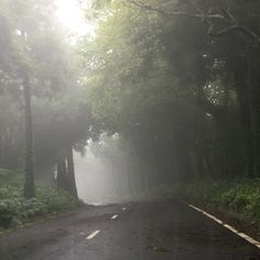 In mezzo a una nuvola nel bosco
