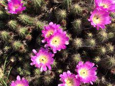Cactus Floreando