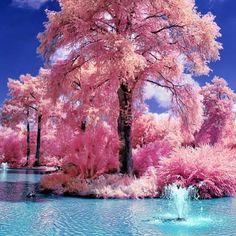 pink   via Facebook