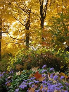 Autumn garden - beautiful leaves turning a golden yellow! #autumngarde @Weddings at Powerscourt House & Gardens Estate