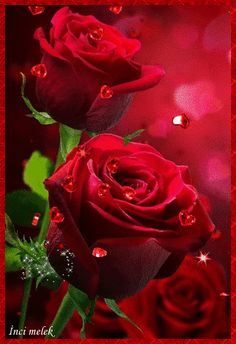 Red Rose Flower, Beautiful Rose Flowers, Amazing Flowers, Purple Flowers, Red Roses, Good Morning Flowers Gif, Good Night Flowers, Morning Gif, Morning Images