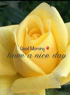 Good Morning With Flower. Good Morning Beautiful Flowers, Good Morning Roses, Good Morning Images Flowers, Good Morning Beautiful Quotes, Good Morning My Love, Good Morning Picture, Morning Pictures, Morning Wish, Beautiful Monday