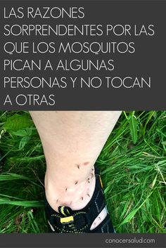 Las razones sorprendentes por las que los mosquitos pican a algunas personas y no tocan a otras #salud