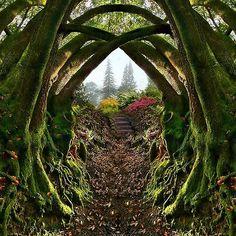 Oregon:Entrance to the Secret Garden, Portland, Oregon Travel Honeymoon Backpack Backpacking Vacation The Secret Garden, Secret Gardens, Hidden Garden, Oregon Travel, Travel Portland, Places To Travel, Places To See, Garden Entrance, Garden Path